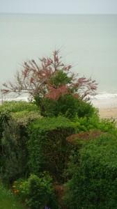 La haie devant la mer - Villers-sur-Mer (Calvados)