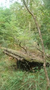 La forêt de Sainte Geneviève (Orne)