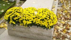 Les chrysanthèmes du Père Lachaise - II  (2)